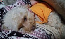 ねむねむよく眠る2