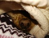一緒の夕寝 肩枕