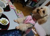 即席ケーキでお茶タイム2