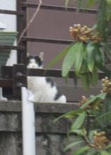 遠くに猫s2