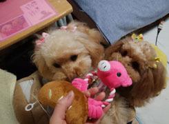 新しいおもちゃどっち?4