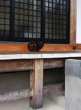 永興寺境内に猫a