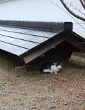 永興寺境内に猫b