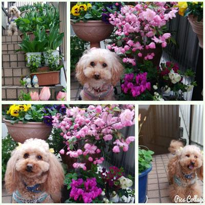 409 春色階段のお花たちa