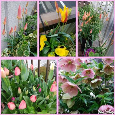 409 春色階段のお花たちb