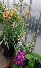 409 春色階段のお花たち2