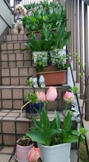 409 春色階段のお花たち3