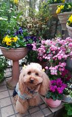 409 春色階段のお花たち5