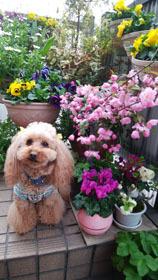 409 春色階段のお花たち6