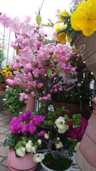410 春色階段のお花たち1