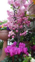 410 春色階段のお花たち2