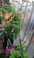 410 春色階段のお花たち5
