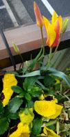 410 春色階段のお花たち6