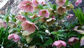 411 春色階段のお花たち3