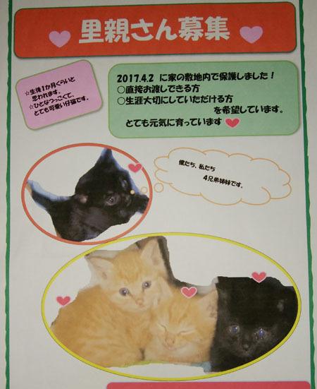 里親募集子猫