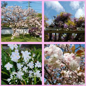 414 散歩 お花