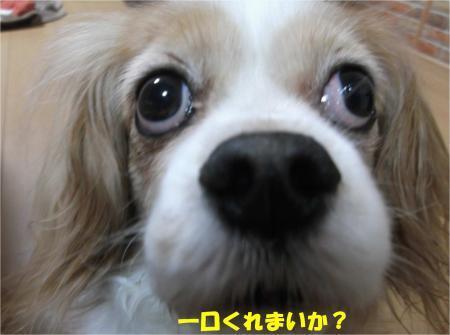 03_convert_20170315174549.jpg