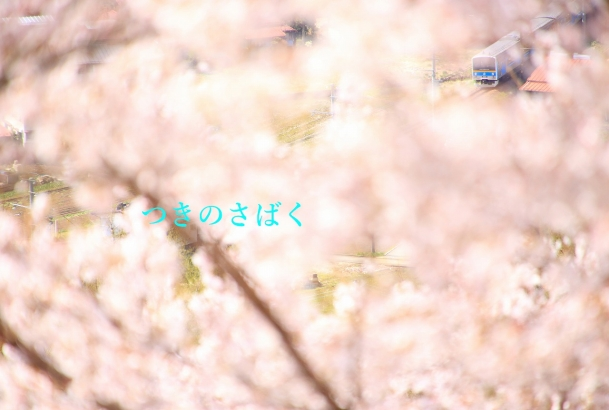 IMG_7019f5600_1.jpg