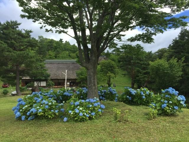 06-01FB金賞 梅雨の中