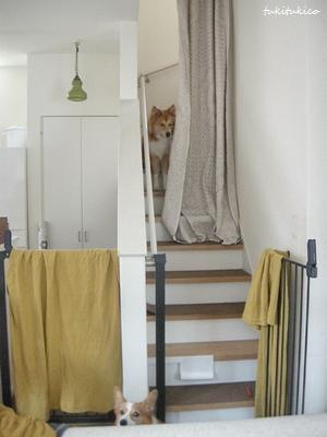 階段にマステ3