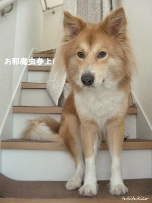階段にマステ6