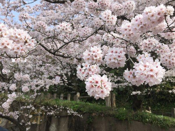kanakasakigu2-tsuruga-070.jpg