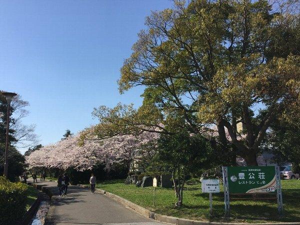 nagahamajoh-sakura-001.jpg
