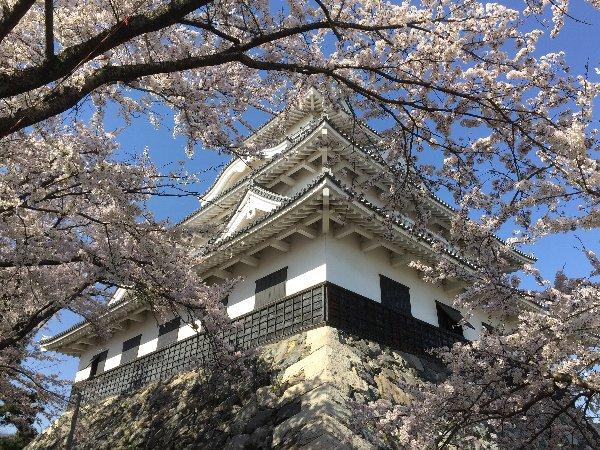 nagahamajoh-sakura-019.jpg