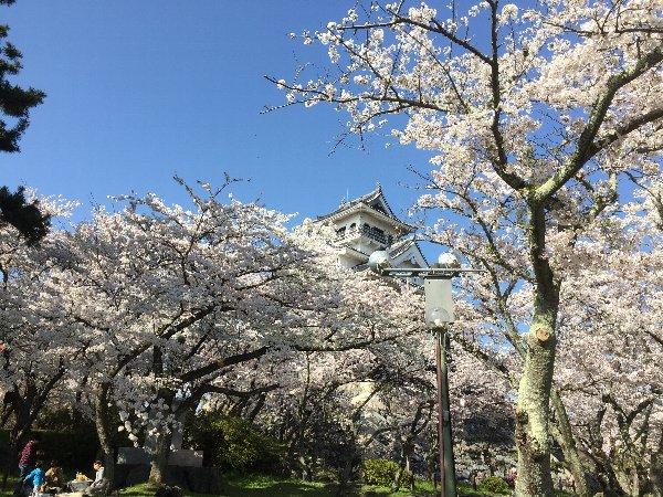 nagahamajoh-sakura-024.jpg