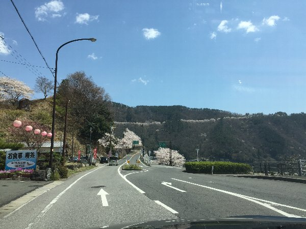 okubiwako-sakura-018.jpg