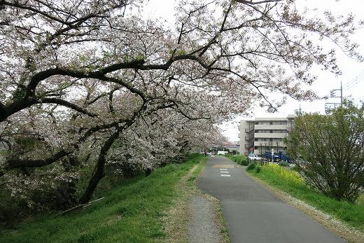 2017-04-15-IMG_3885.jpg