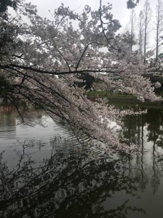 亀城公園020
