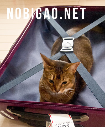 スーツケース猫