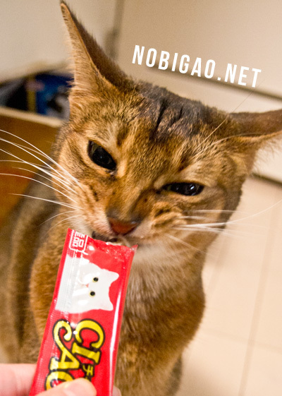 うまうま顔猫