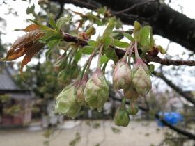 4月11日雨