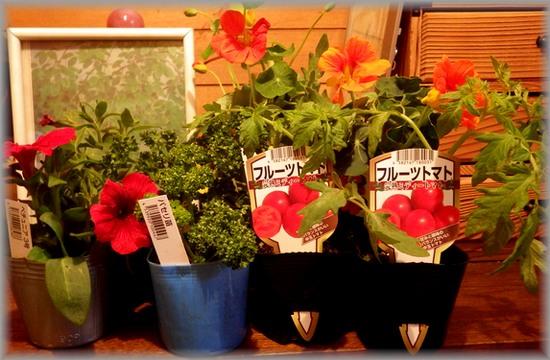 未植えの花たち