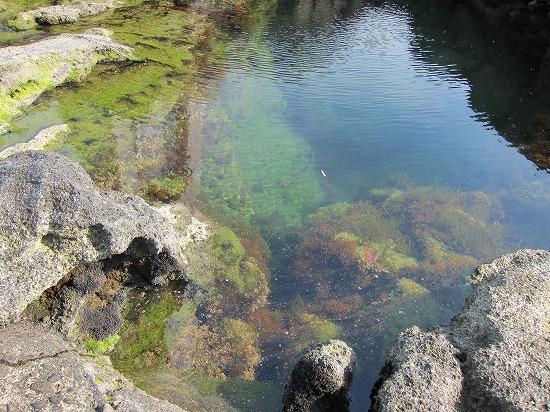 城ヶ島灯台水綺麗