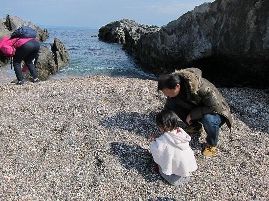 城ヶ島海岸で貝拾い