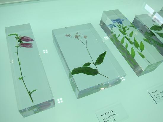高尾植物展示