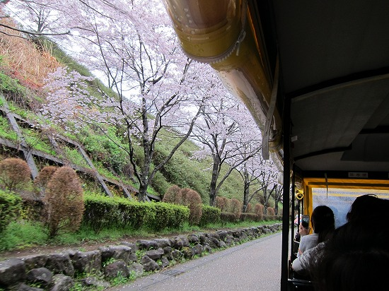 愛ちゃん号と桜