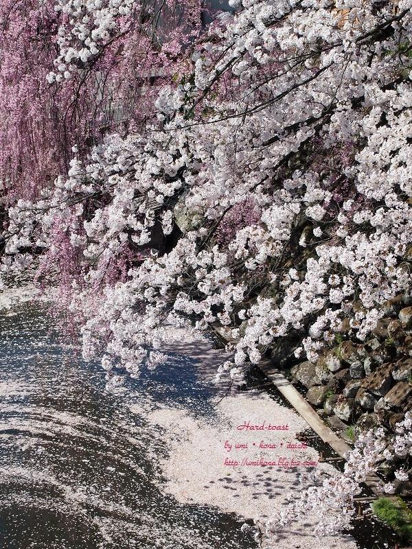桜前線とハードトースト 1