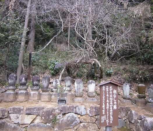 daichuji10.jpg
