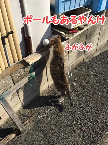 S_5699870507924.jpg
