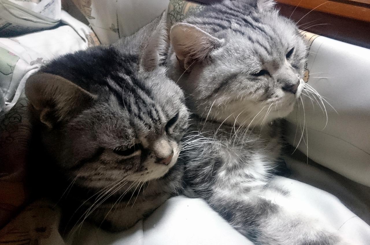 20170302-Cats_Parents-X01.jpg