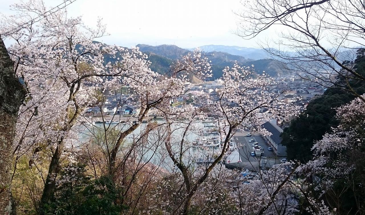 20170408-CherryBlossom_OkamiPark-X01.jpg