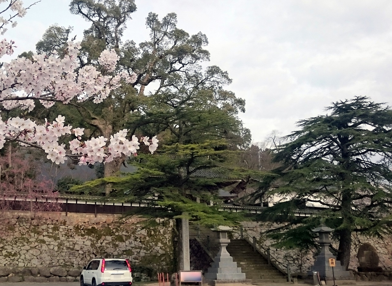 20170408-CherryBlossom_TaijojiTemple-X01.jpg