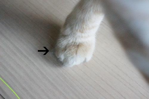 みっくんの足