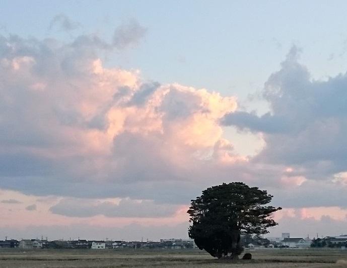 3月11日、樹。