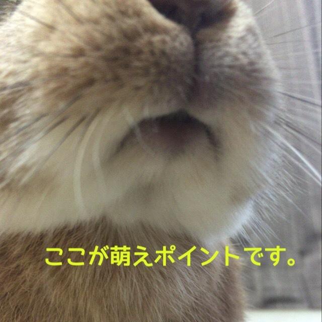 image4 (11)