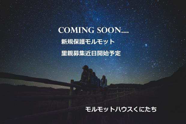 comingsoon1.jpg